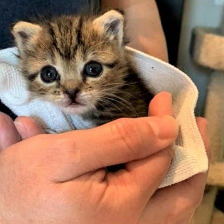 487_Moxie_the_Kitten_4.14 1